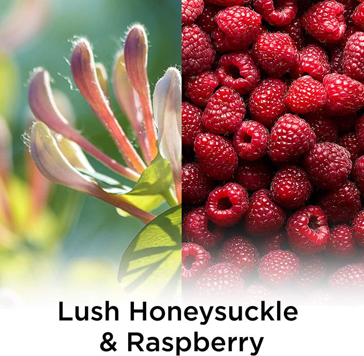 Air Wick Plug in Scented Oil Refill Freshener Essential Oils, Lush Honeysuckle & Raspberry, Lush Honeysuckle and Raspberry, 5 Count